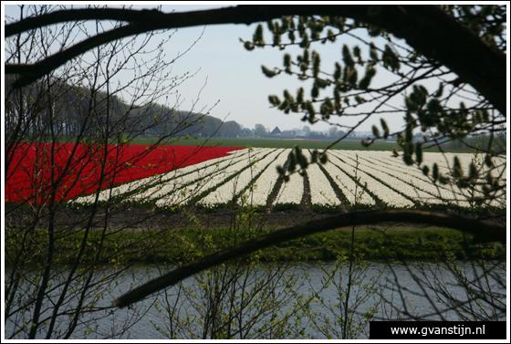Coll2007-01 Bollenvelden Schardam N.H. 110_8696.jpg