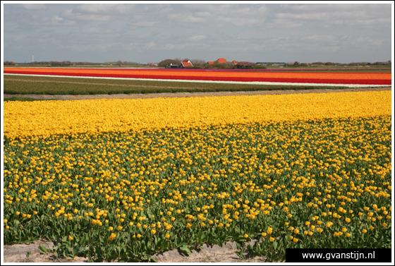Coll2007-01 Bollenvelden omgeving Callantsoog 130_8898.jpg