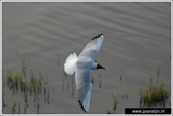 Coll2007-01 Vogelbroedplaats Schellinkhout 165_9364.jpg