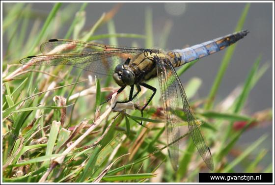 Coll2007-02 Libelle omgeving Andijk  245_0423a.jpg