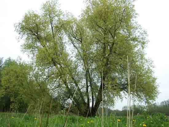 Kleine-Noord Imposante klimboom voor de jeugd blakbij ingang Amsterdamse Bos<br><br> 2420_Kleine_Noord_0789.jpg