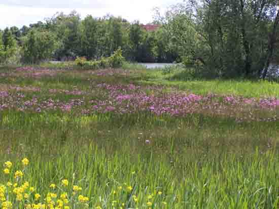 Kleine-Noord Mooi landschap bij en uitzicht op Bovenkerk<br><br> 2460_Kleine_Noord_1313.jpg