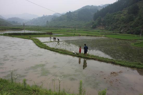 Shiqiao Rijstvelden bij Shiqiao Miao village<br><br> 0150_1308.jpg