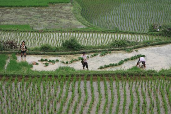 Shiqiao Shiqiao - Guizhou<br><br> 0170_1311.jpg