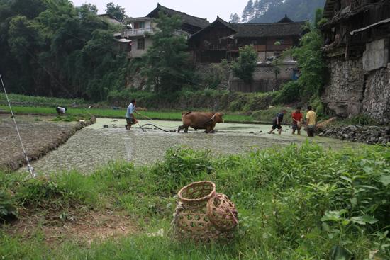 Shiqiao Shiqiao - Guizhou<br><br> 0230_1347.jpg