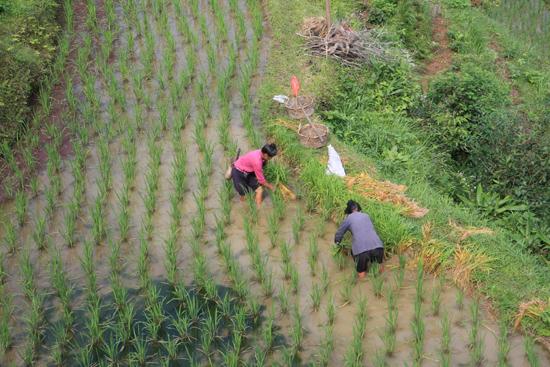 Tang_An Rijstterrassen boven aan de berg bij Tang An Dong village<br><br> 1070_1872.jpg