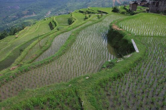 Tang_An Mooie wandeling langs de rijstvelden terug naar het dorp<br><br> 1170_1912.jpg
