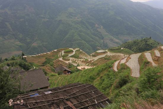 Longji De geweldige rijstterassen van Longji bij Pingan.<br>In alle opzichten adembenemend. Voor ons hét hoogtepunt van de China- tour<br><br> 1600_2221.jpg