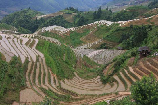Longji China rijstterrassen
