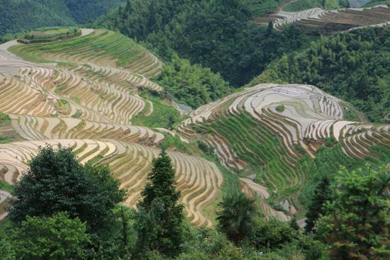 Longji Rijstterrassen van Longji bij Pingan<br><br> 1620_2258.jpg