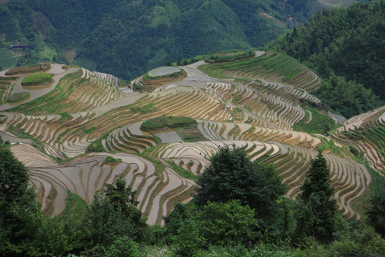 Longji Rijstterrassen van Longji bij Pingan<br><br> 1630_2262.jpg