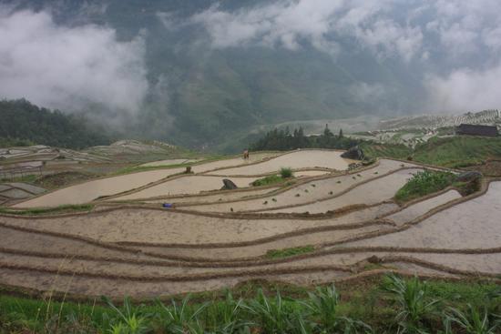 Longji Rijstterrassen van Longji bij Pingan<br><br> 1780_2369.jpg