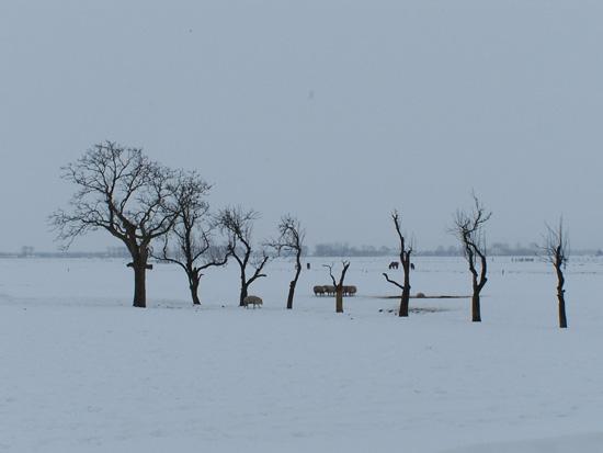Min12 Sneeuw in de Beemster 140-Beemster-polderlandschad-5107.jpg