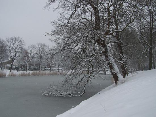 Hoornsneeuw Draafsingel 880_4843.jpg