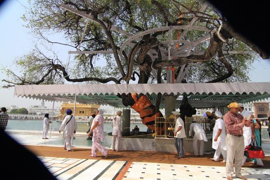 Amritsar1 400 jaar oude boom<br><br> 0150-Amritsar-Gouden-Sikh-tempel-2459.jpg