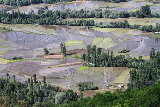 Pahalgam2 Best wel verrassend om rijstvelden te zien in Kashmir<br><br> 0620-Naar-Pahalgam-2917.jpg