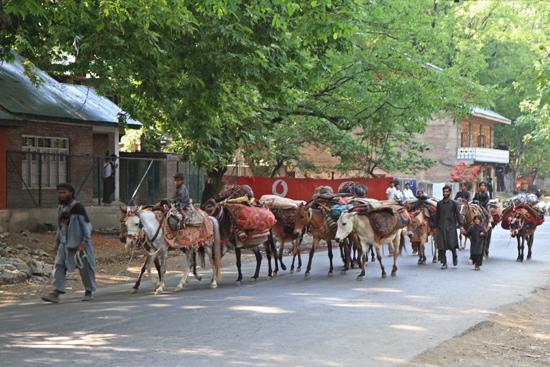 Pahalgam2 Nomaden in Pahalgam<br><br> 0640-Pahalgam-Kashmir-2934.jpg