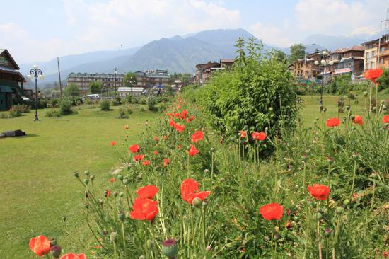 Pahalgam2 Klaprozen<br><br> 0720-Pahalgam-Kashmir-2987.jpg