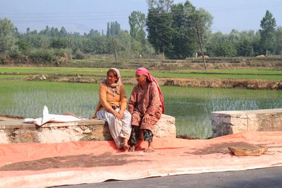 Srinagar1 Zaden worden gedroogd op de weg <br><br> 0790-naar-Srinagar-Kashmir-3023.jpg