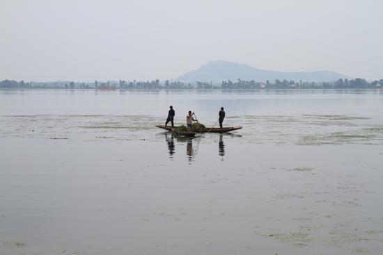 Srinagar2 Srinagar<br>Verwijderen van de vele waterplanten<br><br> 1080-Srinagar-3328.jpg