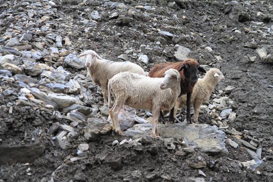 Zoji-La <br><br> 1670-Zoji-La-Pass-Kashmir-Ladakh-3734.jpg