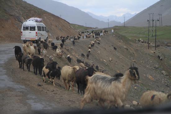 Zoji-La Straatbeeld in Ladakh<br><br> 1750-Zoji-La-Pass-Kashmir-Ladakh-3801.jpg