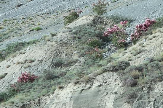 Lamayuru1 Mooie pastel tinten<br><br> 2030-Naar-Lamayuru-Ladakh-3973.jpg