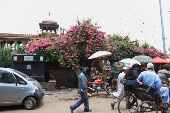 Ladakh-Delhi <br><br> 4040-Delhi-streetlife-5190.jpg