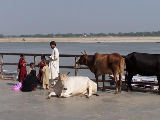 Varanasi1  100_4326.jpg