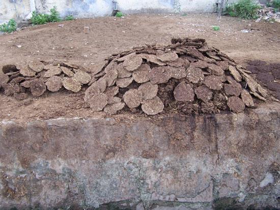 Jaipur Drogen van koeienmest, dit wordt gebruikt als brandstof Koeienmest-als-brandstof_3753.jpg