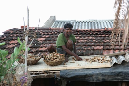 Adivasi-Tour2 Fruit on roofs of asbest....  Etenswaar wordt te drogen gelegd op asbest-golfplaten...Niet echt gezond..  2360_4603.jpg