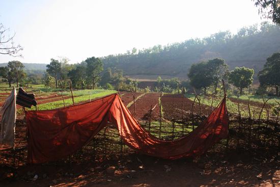 Adivasi-Tour6  Uitzicht over de gewassen 3010_5207.jpg