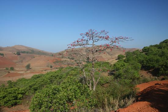Adivasi-Tour7   3080_5305.jpg