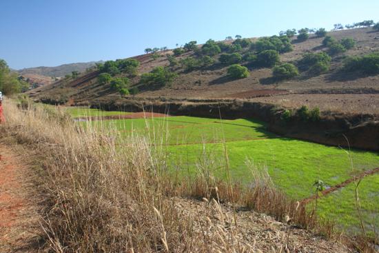 Adivasi-Tour7 Rice fields Rijstvelden, het blijft mooi  3100_5312.jpg