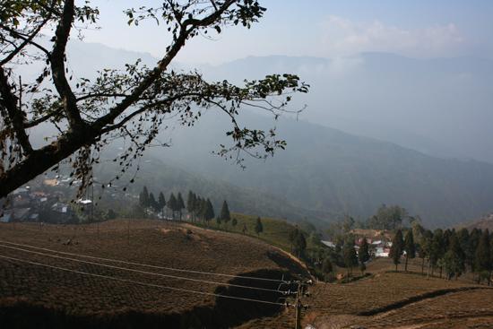 Darjeeling Theeplantages rondom Darjeeling<br><br> 0130_3393.jpg