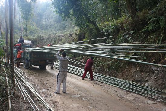 Tashiding Lossen van enorme bamboebomen<br><br> 0460_3661.jpg