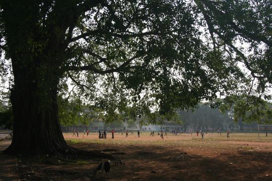 Cochin Cricketveld naast de kerk in het centrum IMG_7443.jpg