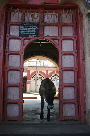 Cochin Streetlife IMG_7525ps.jpg