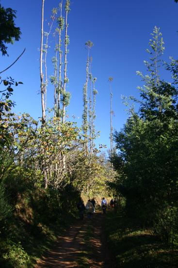 Ooty Mooie bergwandeling in de nog frisse ochtend IMG_7862.jpg