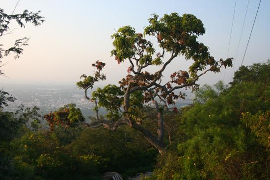 Mysore  IMG_8234.jpg