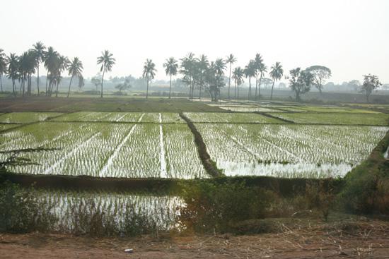 Boerendorpje Rijstvelden gezien vanuit de bus IMG_8978.jpg