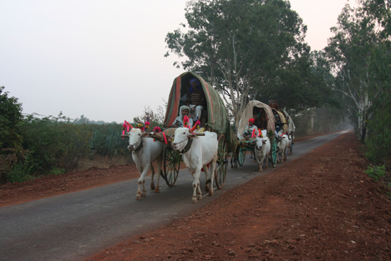 Goa Feestelijk uitgedoste stoet ossenkarren IMG_9247.jpg