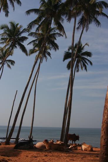 Goa Anjuna beach IMG_9355.jpg