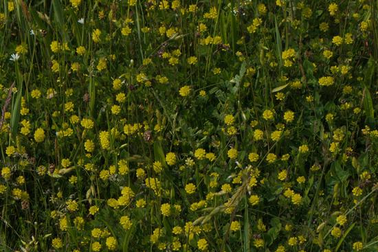 Macro03 Zwanenwater bij Callantsoog<br><br> Zwanenwater-4111.jpg