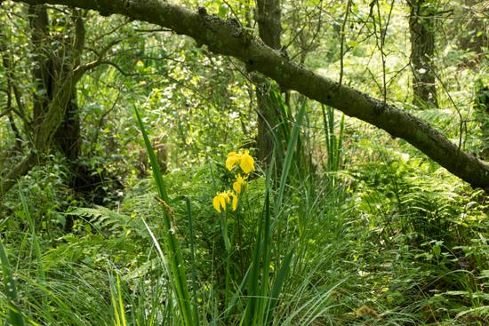 Macro03 Zwanenwater bij Callantsoog<br><br> Zwanenwater-4188.jpg