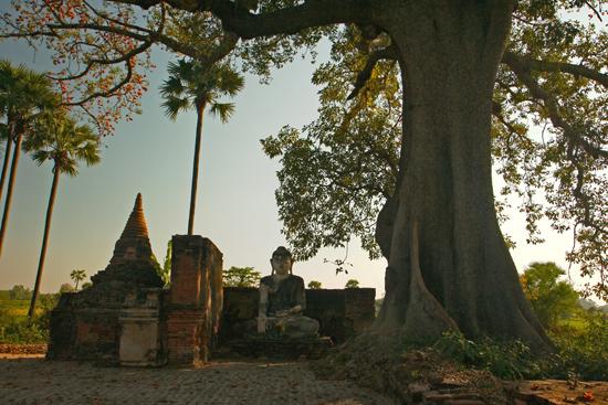 Ava Mooi oud Boeddha-beeld onder prachtige boom   1140_5469.jpg