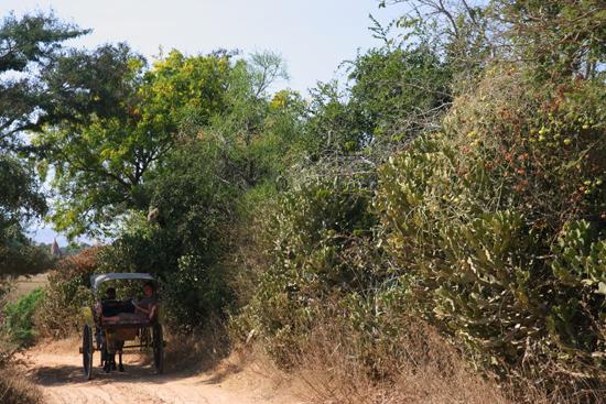 Bagan2 Bagan Een fantastische rit met de paardenkoets    2040_6205.jpg