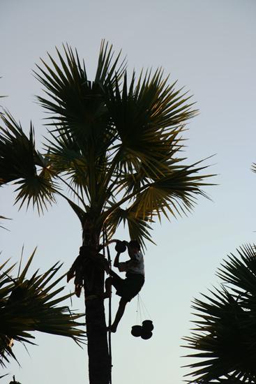 Mountpopa Verzamelpotten voor de palmsuikerolie    2280_6332.jpg