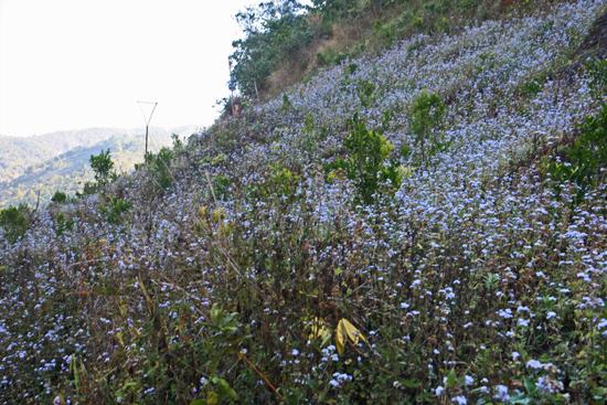 Kalaw1 Trekking langs de dorpen van de bergvolkeren Bloeiende berghellingen   2570_6478.jpg