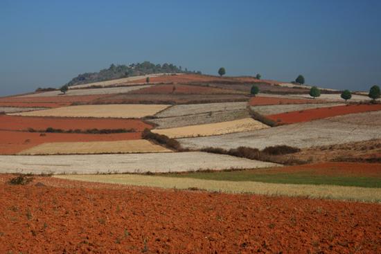 Pindaya Onderweg naar Inle Kleurige akkers op de hellingen van de heuvels   2851_6779.jpg